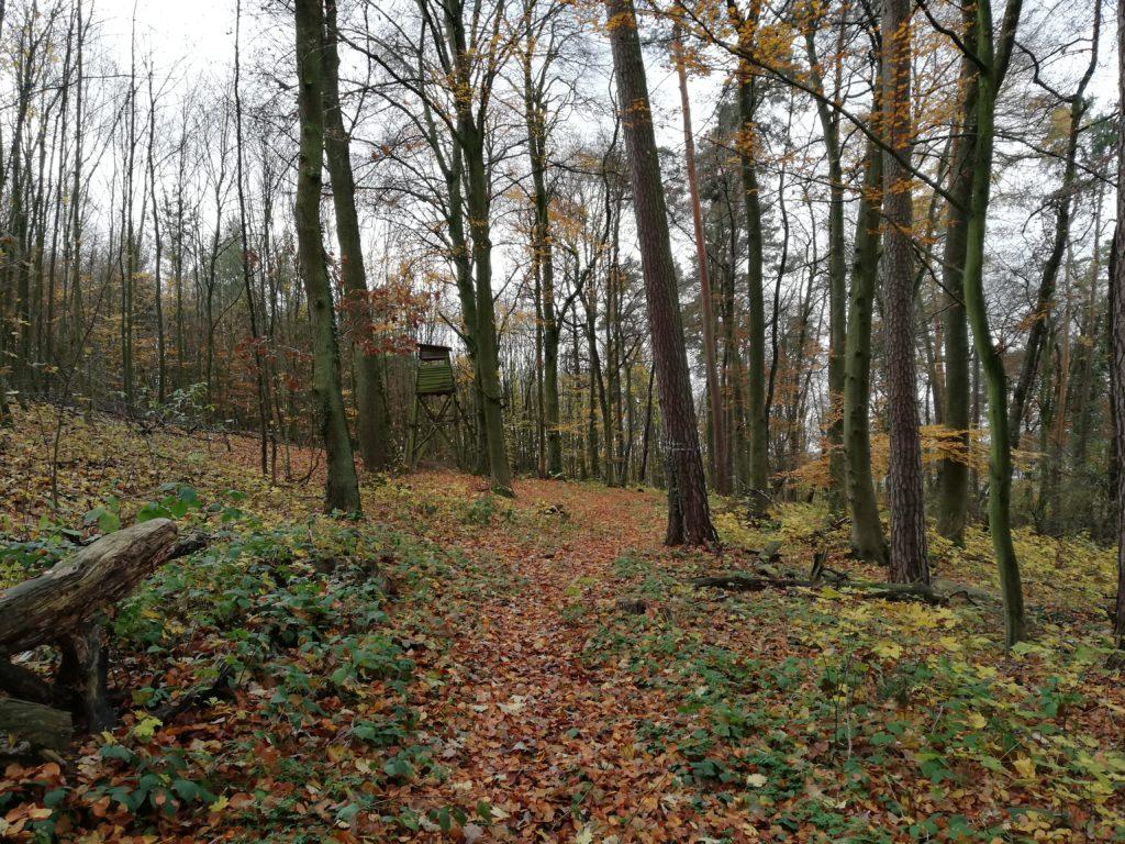 Wochenlieblinge Wald