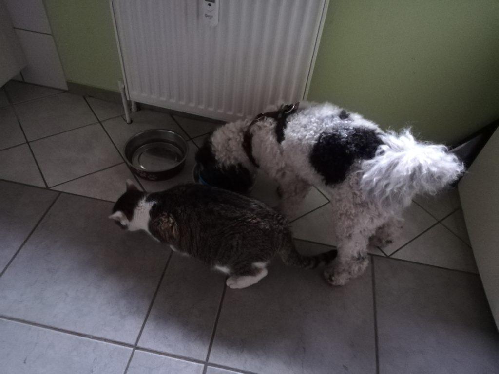 Freunde: Hund und Katze